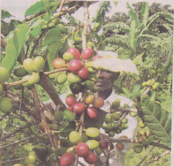 Farmers urge government on implementation of coffee policy.