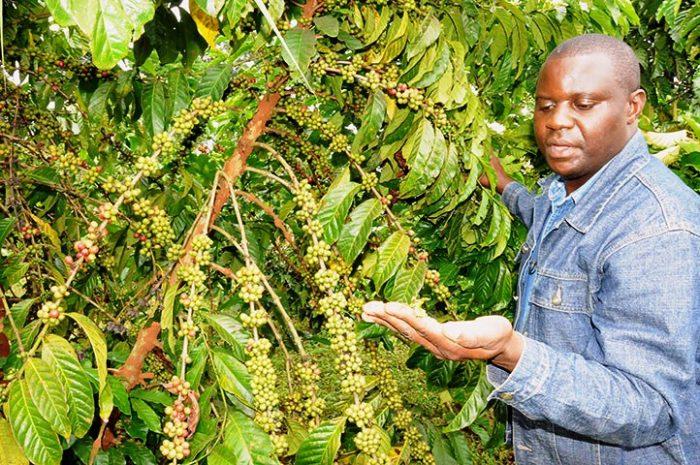 Coffee Produce