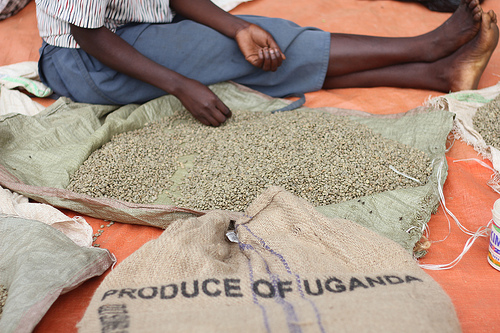 Farmers smile as coffee prices rise