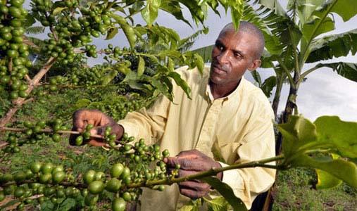 Ankole union coffee exports increase