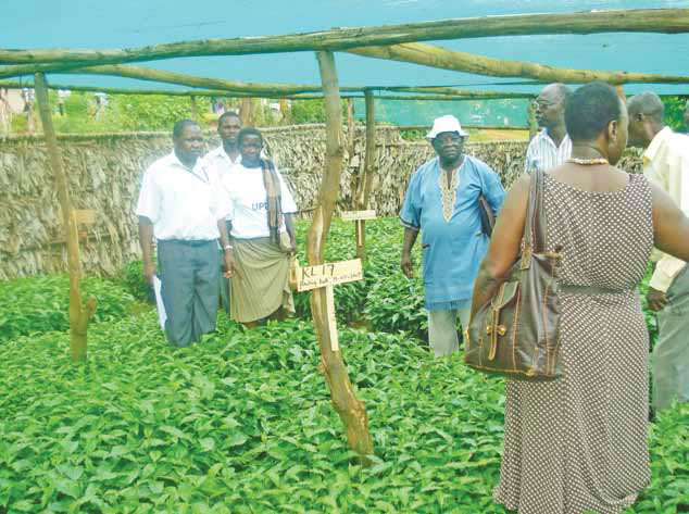 Nakaseke farmers receive seedlings to boost incomes