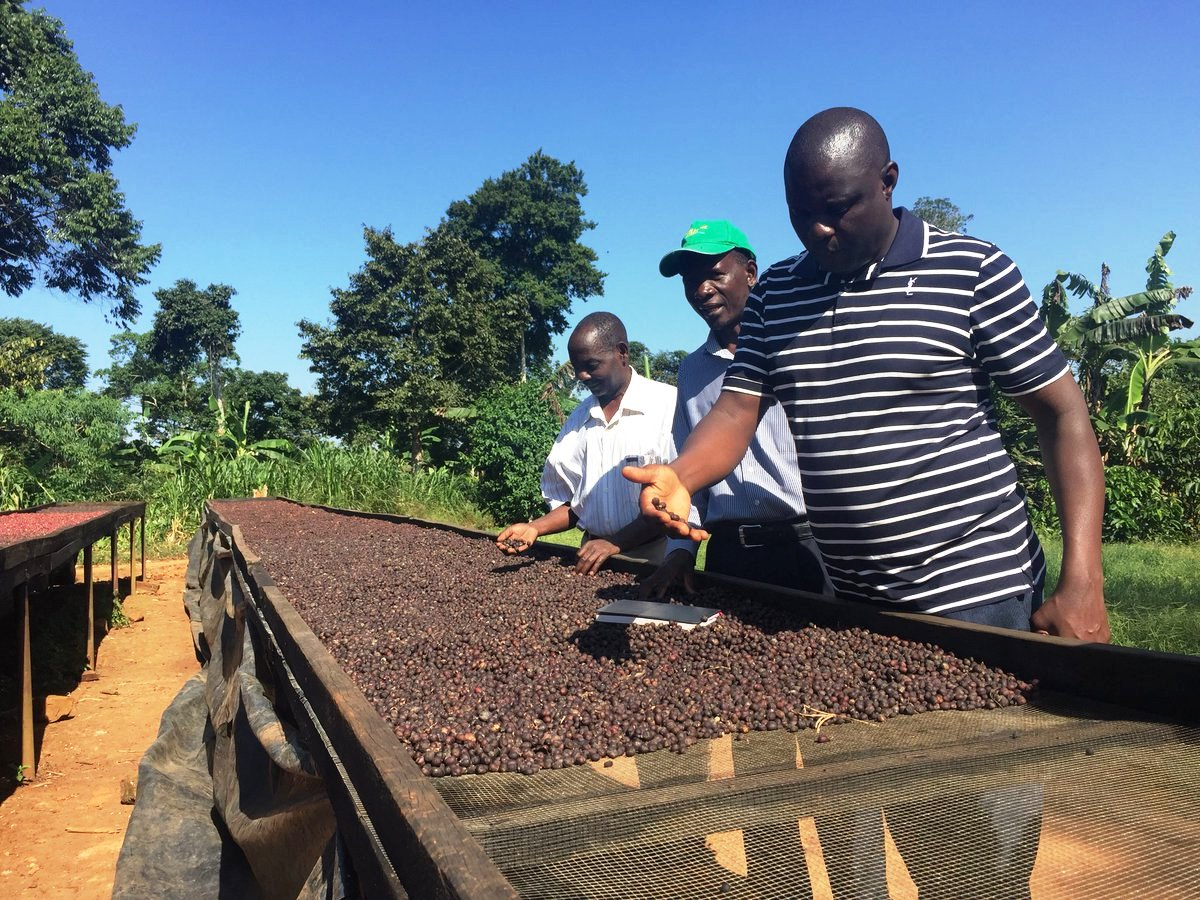 Coffee Farming and Harvesting Training