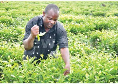 What the 2014/2015 budget offers to farmers