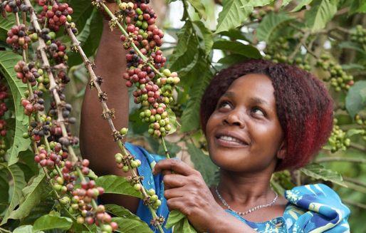 Nucafé – turning coffee farmers to exporters