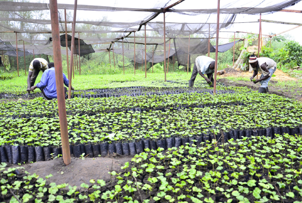 How two acres of coffee can earn you Shs32m a year