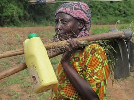 UCDA starts a campaign to increase coffee production in Lango and Acholi sub-regions in Uganda